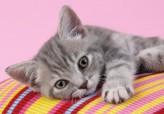 """Puzzle """"Animals - Kätzchen/Kitty"""" - 500 Teile"""